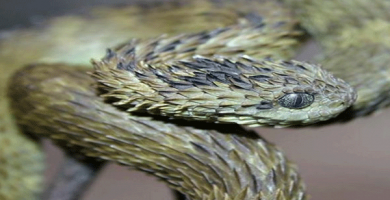 ATHERIS serpiente